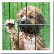 prisonnier système carcéral prison pénitencier pen tole bagnard