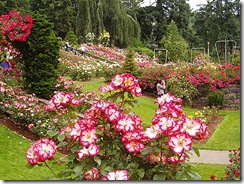 rose-garden-queen-elisabeth-park-conservatoire-bloedel