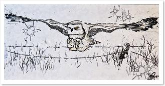 hibou-zootherapie-prison-penitencier