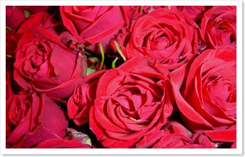 roses-equitables-st-valentin-commerce-equitable