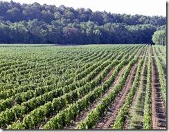 route-des-vins-du-quebec-vignobles-quebecois