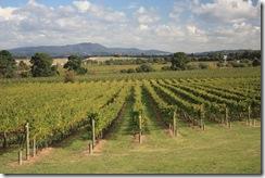 vins-du-quebec-route-des-vins-vignobles