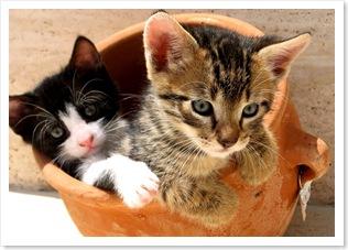 zoothérapie animale zoothérapeute soutien animalier