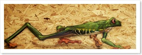 zootherapie-grenouille-prison-penitencier
