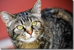 chat-chaton-felin-minou-cats