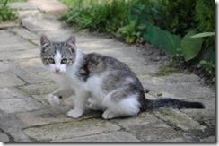 chat-felin-minou-cat-chatons