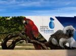 murales biodome montreal muraliste graffiti