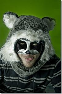 racoon[1]