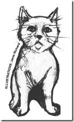 chaton chats félins félidés