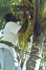 aide humanitaire projet cuba réinsertion cubain travail ferme agricole
