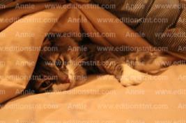 photographe-chat-photos-animaux-photographie-t-shirt-cartes-voeux