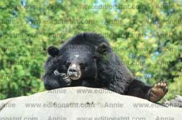 photo animaux photographie ours t-shirt cartes voeux carte anniversaire
