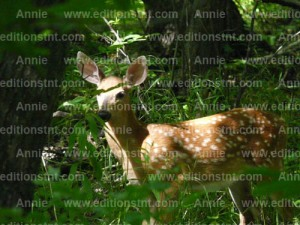 photographie animaux cartes voeux t-shirts carte anniversaire chevreuil