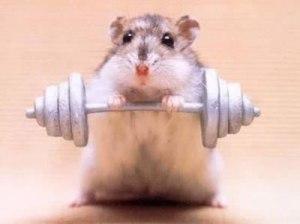 hamster dans la tête pleins d'idées photos animaux