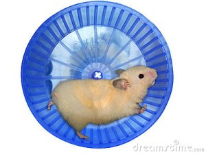 hamster photos tourne cage photographies animaux