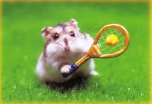 hamster photos vacances photographies animaux