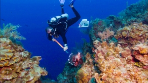 lionfish fondation sedna pollution aquatique environnement