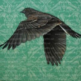 arpi-fly-away-murale street art urban graffiti