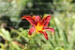 photographie-nature-plantes-fleurs-zoo-granby-11-18