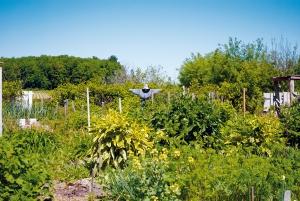 environnement Potagers d'antan agriculture biodiversité alimentaire