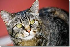 chat-chaton-felin-minou-cats1