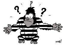 gorille colin mcgregor afrique prison prisonnier