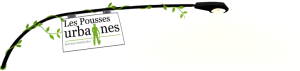 commerce équitable communautaire pousses vertes réinsertion environnement