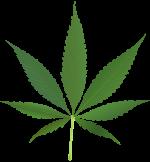 drogue cannabis marijuana légalisation